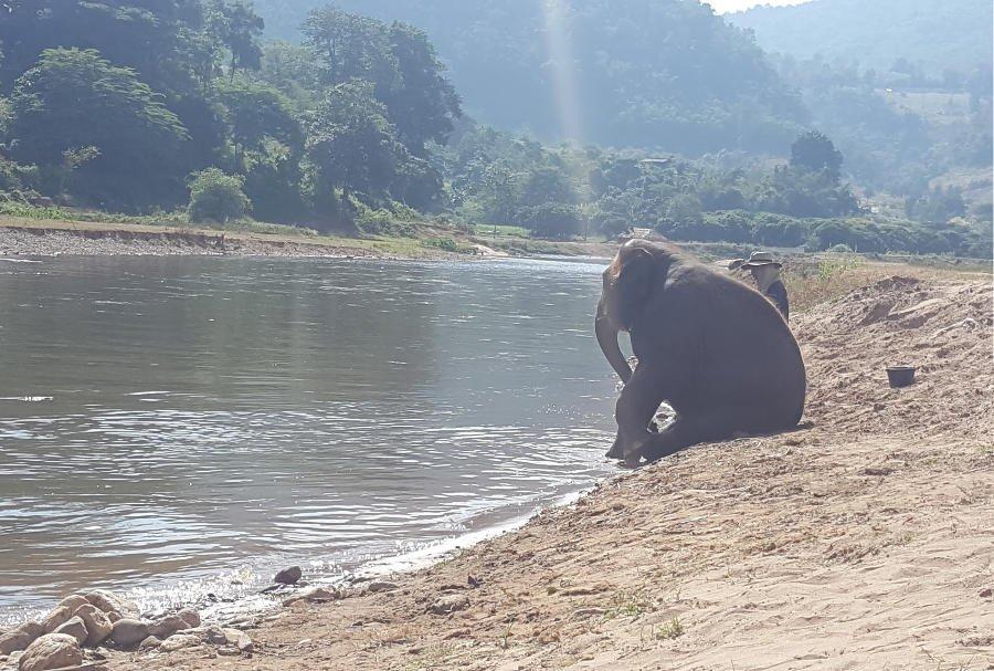 Elephant Nature Park.
