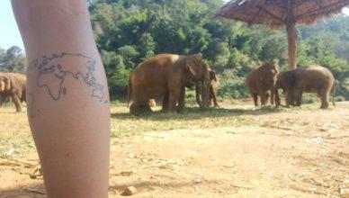 Elefantes fitness comendo folhas ;)