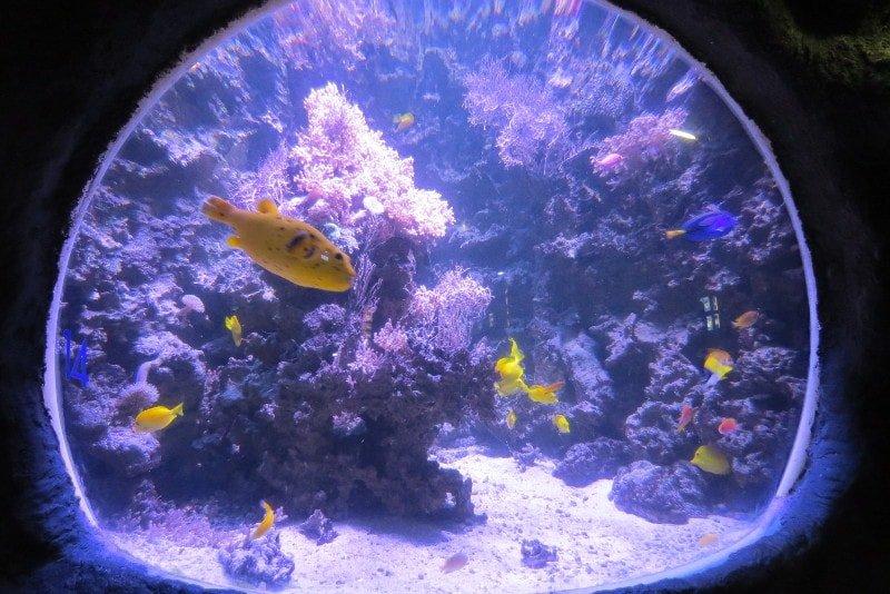 Olha esses peixes que lindos! - Sea Life Helsinque