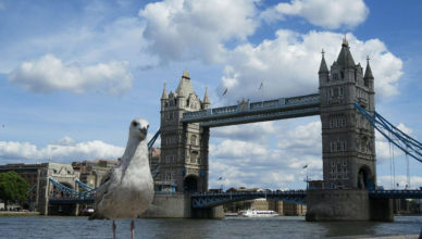 Tower Bridge ao fundo