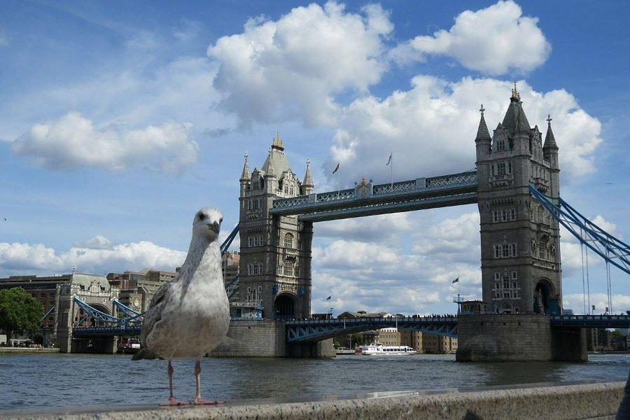 Tower Bridge ao fundo