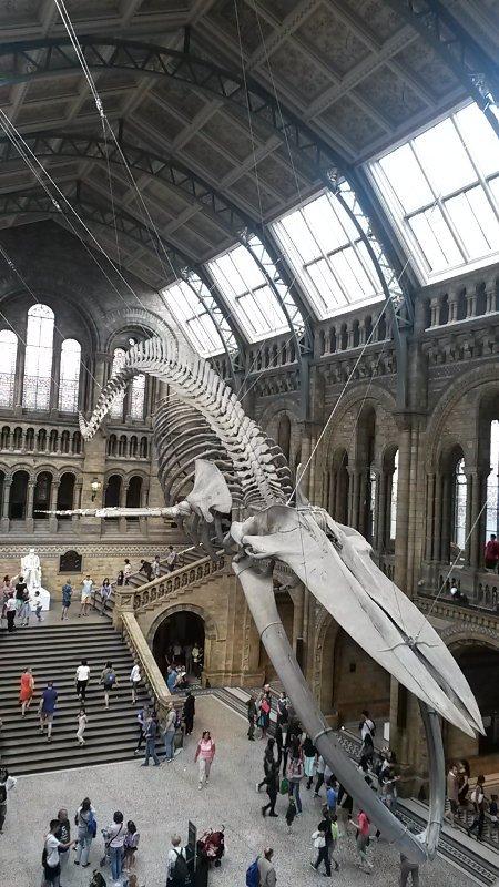 Museu de História Natural   O que fazer em Londres em 4 dias