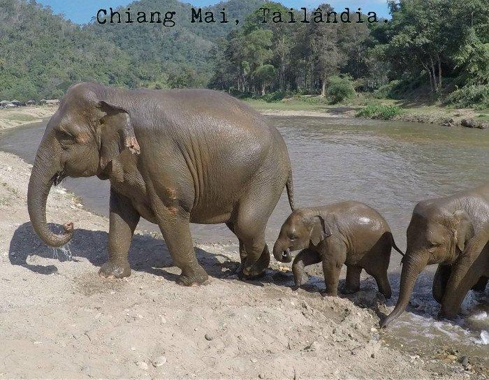 Família de elefantes em um santuário na Tailândia.