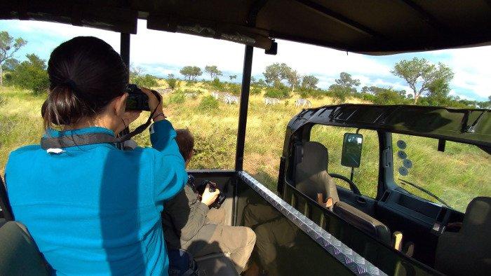 Game drive, Kruger National Park.